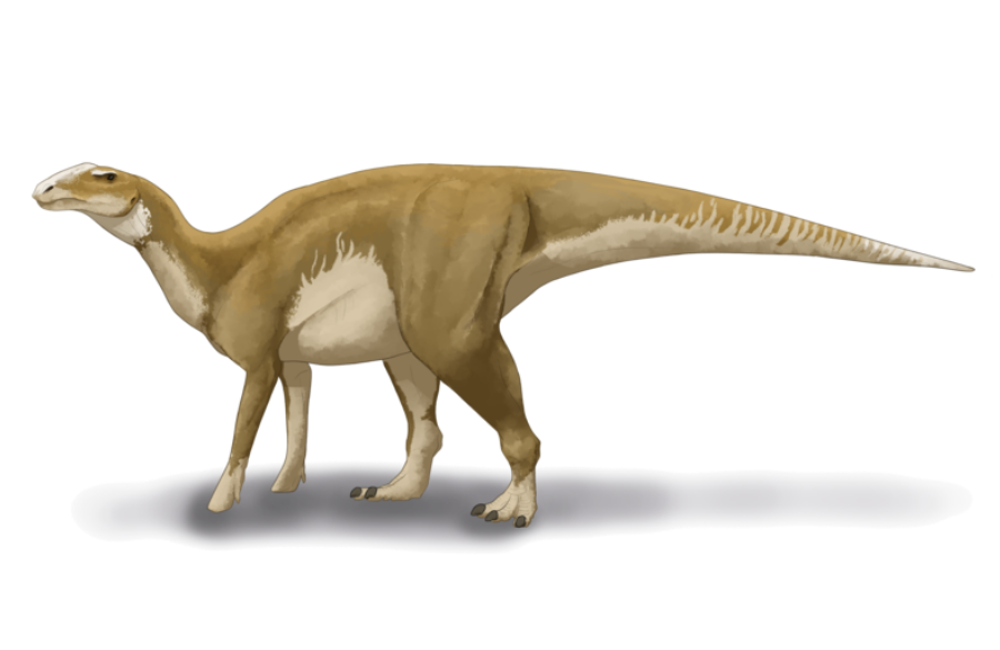 Hadrosaurus Fact Sheet